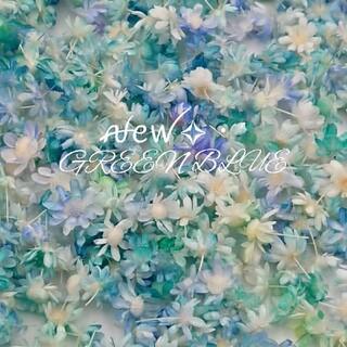 新色『GREEN BLUE』グラデ  スターフラワーミニ(ドライフラワー)