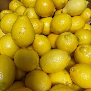 国産レモン(フルーツ)