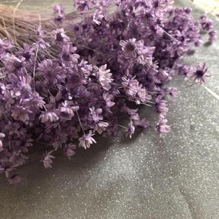 ドライフラワー 花材紫(ドライフラワー)
