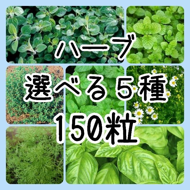 【ハーブの種】選べる5種 150粒 種子 食品/飲料/酒の食品(野菜)の商品写真