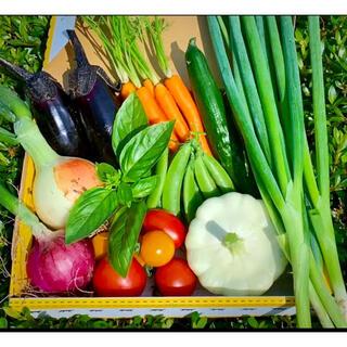 畑直送 無農薬新鮮野菜(野菜)