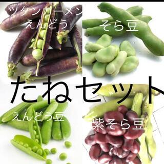 ツタンカーメンえんどう 紫そら豆などのタネ4種セット(その他)