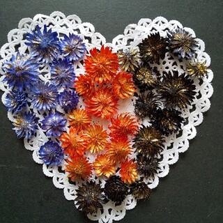 チーゼルフラワー 30個 ハロウィーンカラー ③ ハーバリウム花材ドライフラワー(ドライフラワー)