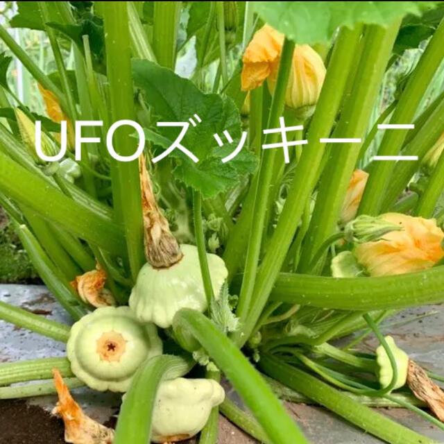 畑直送 無農薬新鮮野菜 食品/飲料/酒の食品(野菜)の商品写真