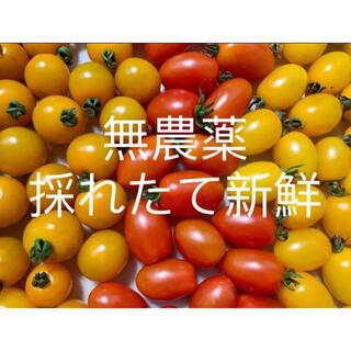 無農薬栽培 ミニトマトミックス 900g以上(野菜)