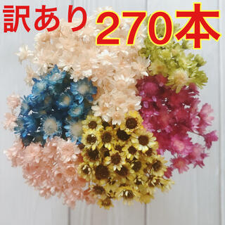 【訳あり】B スターフラワーブロッサム 270本 ひまわり 向日葵 ヒマワリ(ドライフラワー)