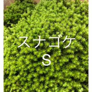 スナゴケ S(その他)