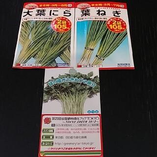 新品未開封☆葉ねぎ 大葉にら 種みつばの種のおまけ付き(野菜)