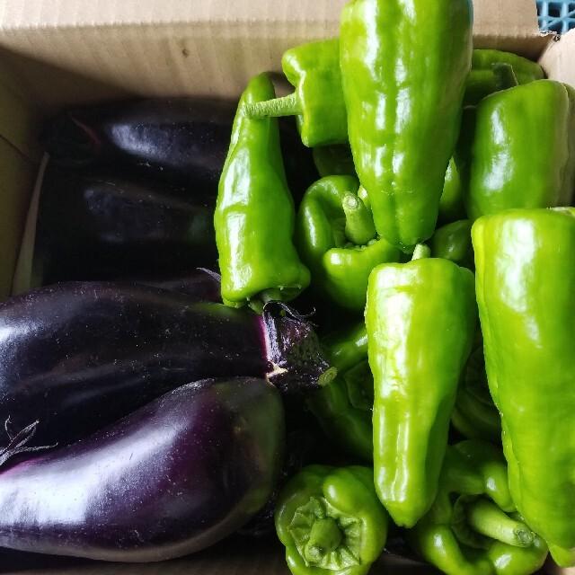 B茄子とジャンボピーマン 60サイズ 食品/飲料/酒の食品(野菜)の商品写真