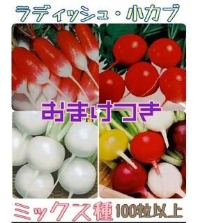 レインボーラディッシュ 小かぶ はつかだいこん 野菜種(野菜)