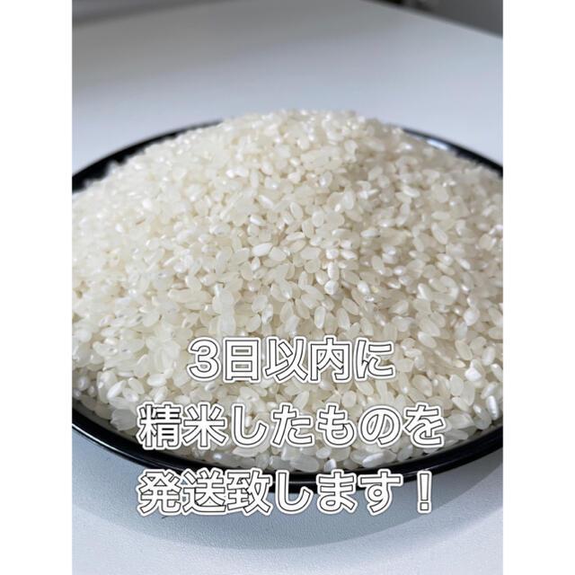 【送料無料】近江のお米 10kg(10kg×1本) 食品/飲料/酒の食品(米/穀物)の商品写真