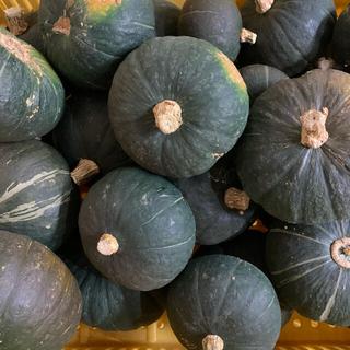 農家直送 かぼちゃ(栗坊) 8キロ