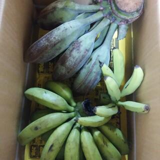 またたび様専用 アイスクリームバナナ 台湾系島バナナ 農薬不使用 自然栽培 (フルーツ)