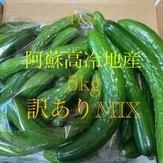 阿蘇のきゅうり 訳ありMIX 5kg 80サイズ8月7日発送(野菜)
