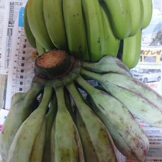 幻のアイスクリームブルーバナナに台湾系島バナナセット 自然栽培 農薬不使用特産物(フルーツ)