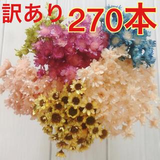 【訳あり】スターフラワーブロッサム 270本 ひまわり 向日葵 キャンディカラー(ドライフラワー)