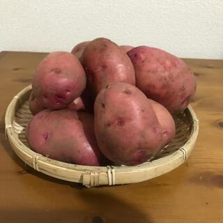 甘くてホクホクのアンデスレッド4.3kg(野菜)
