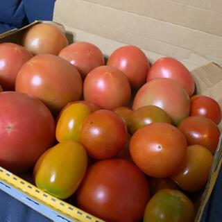 採れたて無農薬 桃太郎トマトとカラフルとまと 明日発送