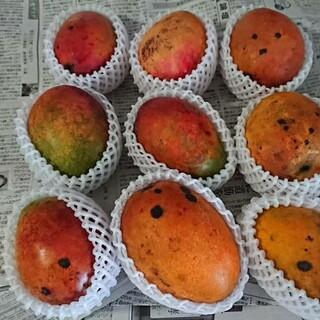 13 マンゴー 3kg 家庭用 傷黒点シワあり(フルーツ)