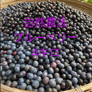 💝2021年完熟生ブルーベリー4 kg クール冷蔵送料込(フルーツ)