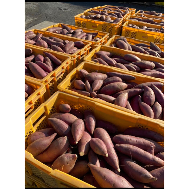 サツマイモ シルクスイート 5キロ 食品/飲料/酒の食品(野菜)の商品写真