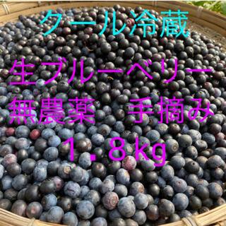 💝クール全国配送生ブルーベリー1.8kg クール冷蔵送料込(フルーツ)