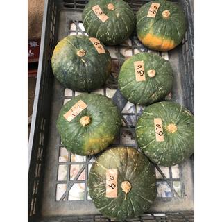 ma 86has様専用 自然栽培の栗かぼちゃ①