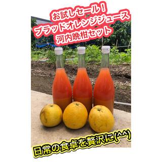 美味しく免疫力UP 宇和島産 ブラッドオレンジジュース(フルーツ)