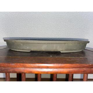 盆栽鉢 陶春 楕円 緑泥 切足 鉢 植木鉢(その他)