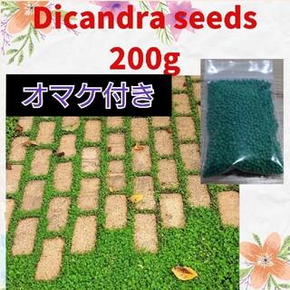ダイカンドラ 種 200g 【グランドカバーに】(その他)
