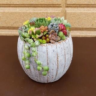 ❀ 多肉植物寄せ植え ❀ まぁ〜るいセメント鉢 ❀(プランター)