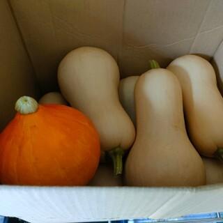 バターナッツかぼちゃ(コリンキー入)6.0kg農薬化学肥料不使用