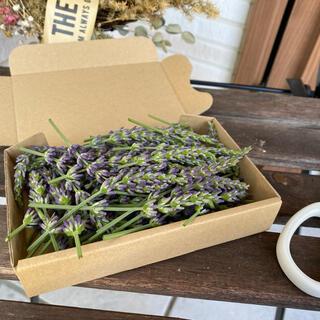 今年収穫!箱いっぱいのラベンダー(ドライフラワー)