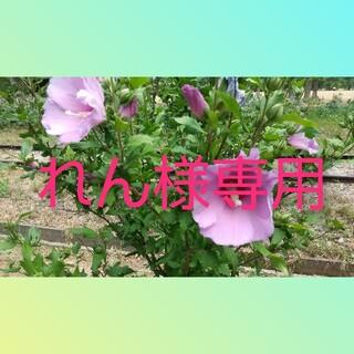 WiLL (ウィル) 2021年 08月号(ニュース/総合)