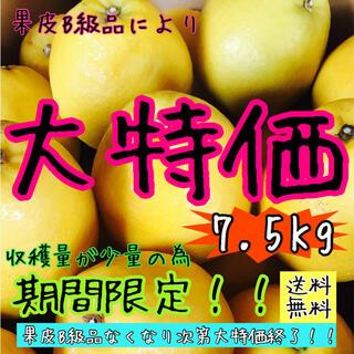 【愛媛えひめ産】フルーツ 果物 くだもの 果実 柑橘 みかん《河内晩柑》(フルーツ)