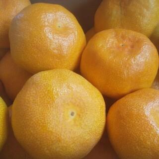 大分県産ハウスミカン 5キロ(フルーツ)