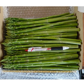 細アスパラガス 1kg 採りたて野菜(野菜)