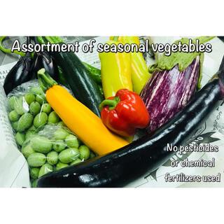 採りたて新鮮⁽⁽٩(๑˃̶͈̀ ᗨ ˂̶͈́)۶⁾⁾ 旬野菜の詰め合わせ 無農薬(野菜)