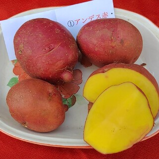 種芋。秋植え用🌞アンデス赤1.4㌔程(野菜)