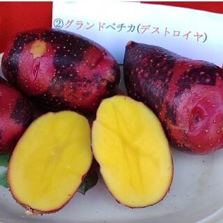 種芋。秋植え用🌞グランドペチカ1.4㌔程(野菜)