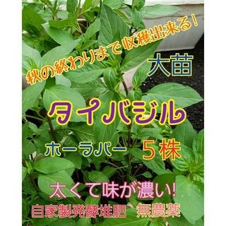 タイバジル大苗 5株 抜き苗 色々な料理に! 丁寧発送♡(野菜)