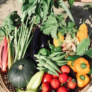畑直送‼︎ 20種類の野菜から厳選して60サイズいっぱいの野菜セット 無農薬野菜