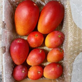 宮崎県産 完熟ミニマンゴー 大きめ詰め合わせ 1kg