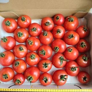 桃色ミニトマト 1キロ(野菜)