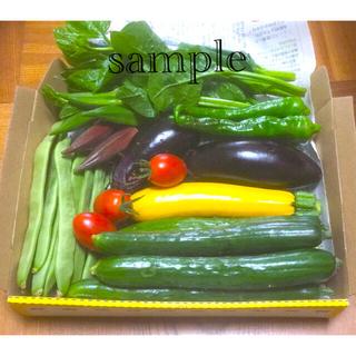 野菜詰め合わせ 採りたておすすめ コンパクトBOX