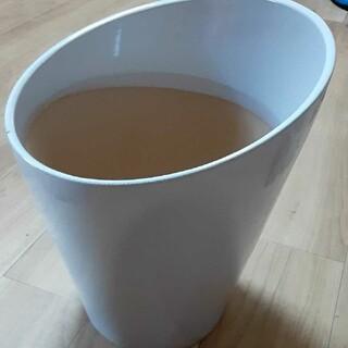 ❤️大輪・胡蝶蘭の鉢❤️