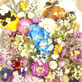 ドライフラワー花材セットNo.217⁑カラフルバラエティー(ドライフラワー)