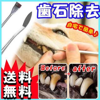犬用 歯の汚れ取りスケーラー スケラー 先細&平型 歯石取り ペット 犬 猫 S(犬)
