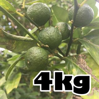 シークワーサー 3kg 農薬・肥料不使用(フルーツ)