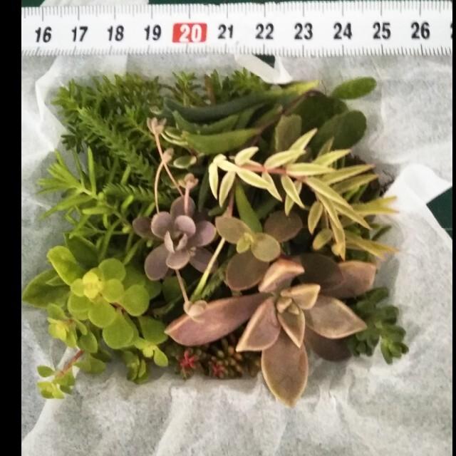 多肉植物 詰合せ ハンドメイドのフラワー/ガーデン(プランター)の商品写真